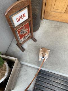 つまらなそうなイヌの写真・画像素材[2439204]