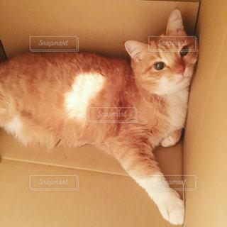 猫の写真・画像素材[268473]