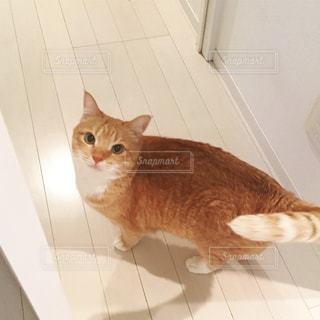 猫の写真・画像素材[282654]