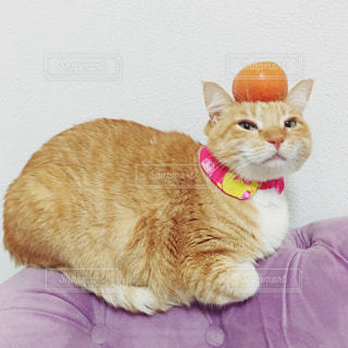 No.282674 猫