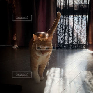 猫の写真・画像素材[282858]
