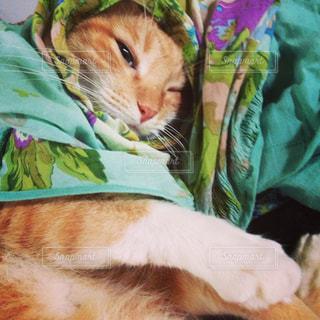 猫の写真・画像素材[286552]