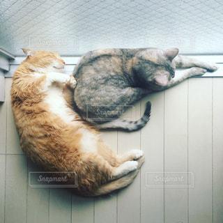猫の写真・画像素材[287010]