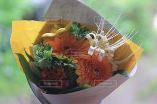 花の写真・画像素材[268667]