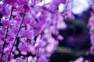 花の写真・画像素材[405874]