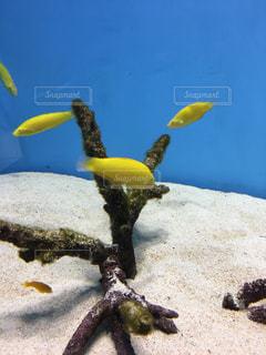 黄色のフリスビーを持つ動物の写真・画像素材[1077658]