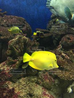 水の中の魚の群れの写真・画像素材[1077662]