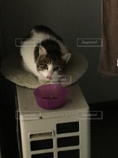 猫 - No.268902