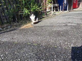 猫 - No.269421
