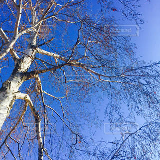 冬物語の写真・画像素材[269273]