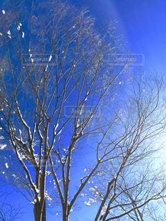冬の写真・画像素材[338503]