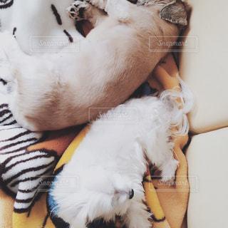 犬の写真・画像素材[269938]