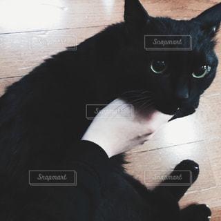 猫の写真・画像素材[269942]