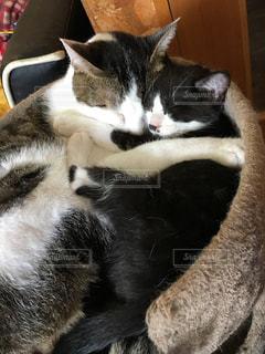 猫の写真・画像素材[269348]