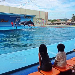 イルカ,水族館,イルカショー,観客