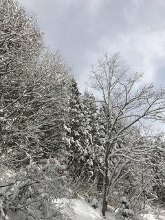 冬の写真・画像素材[315860]