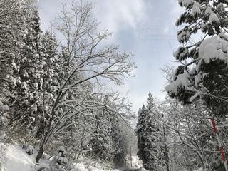 冬の写真・画像素材[315861]