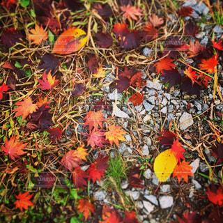 秋の写真・画像素材[269522]