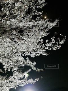 空の写真・画像素材[1095060]