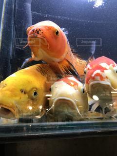 魚の写真・画像素材[269701]