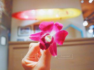 お花💐の写真・画像素材[768961]