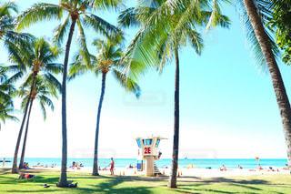 ヤシの木とビーチの人々 のグループ - No.980965