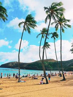 ヤシの木とビーチの人々 のグループ - No.998802
