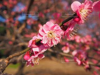 近くの花のアップの写真・画像素材[1848017]