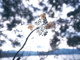 木の枝にとまった鳥の写真・画像素材[1848029]