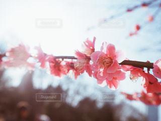 近くの花のアップの写真・画像素材[1848033]