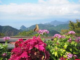 蝶々と景色♪の写真・画像素材[2586718]