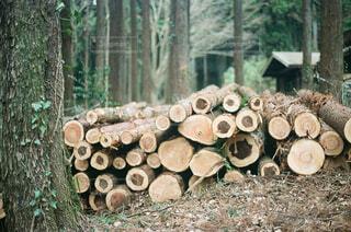 キャンプ場の切り倒された木の写真・画像素材[4276573]