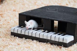 ピアノの写真・画像素材[273317]