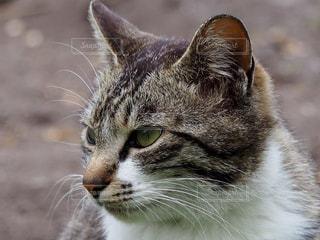 猫の写真・画像素材[270001]