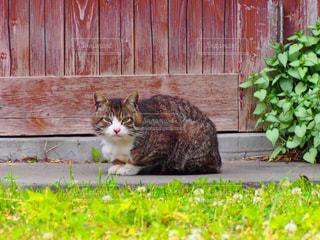 猫の写真・画像素材[270002]