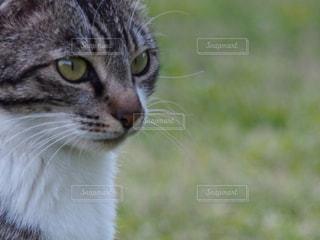 猫の写真・画像素材[270004]