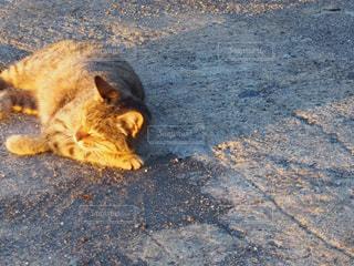 猫の写真・画像素材[270010]
