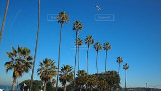 空の写真・画像素材[269886]