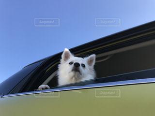 犬の写真・画像素材[270603]