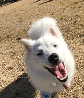 犬の写真・画像素材[270609]