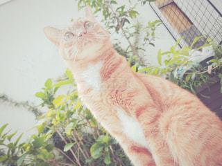 猫の写真・画像素材[271789]