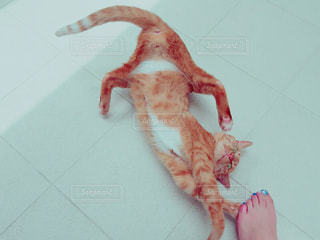 猫の写真・画像素材[272268]