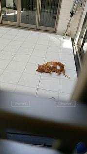 猫の写真・画像素材[272647]