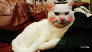 猫 - No.272669