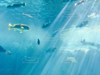 魚 - No.270922