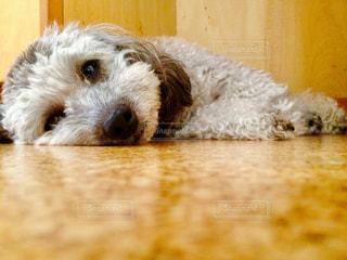 犬の写真・画像素材[274161]