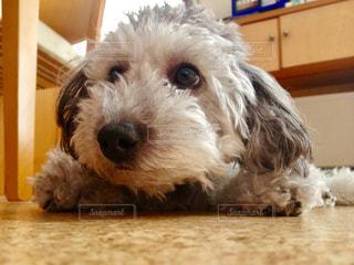 犬の写真・画像素材[274162]