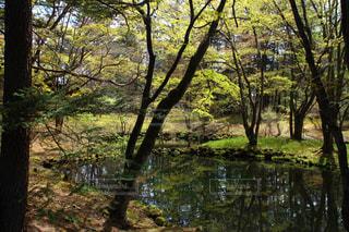 湖 - No.609972