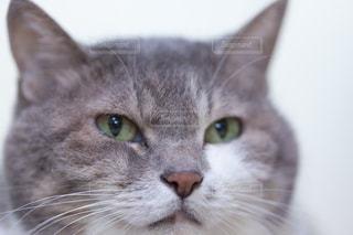 猫の写真・画像素材[270773]