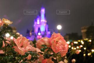 花の写真・画像素材[270821]